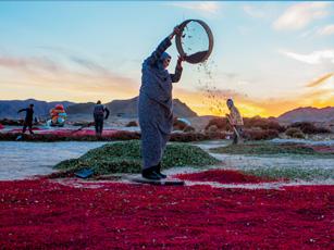 روستای افین ، پایتخت زرشک ایران زمین